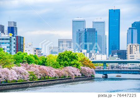 中之島の桜 76447225