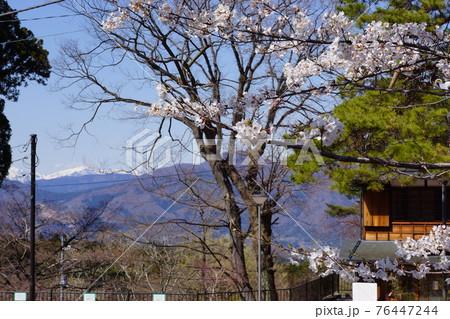 群馬県の伊香保温泉の桜 76447244