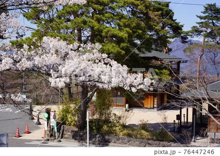 群馬県の伊香保温泉の桜 76447246