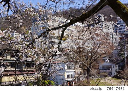 群馬県の伊香保温泉の桜 76447481