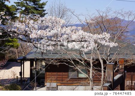 群馬県の伊香保温泉の桜 76447485