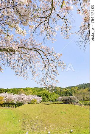 桜満開の石舞台古墳 76447539