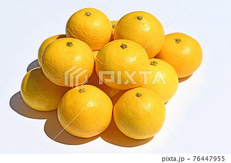 柑橘類(湘南ゴールド) 76447955