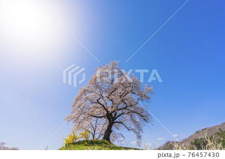 青空と白石川堤一目千本桜 宮城県柴田町 76457430