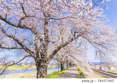 青空と白石川堤一目千本桜 宮城県柴田町 76457465