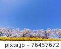 青空と満開の桜 白石川堤一目千本桜 宮城県柴田町 76457672