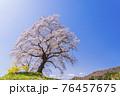 青空と満開の桜 白石川堤一目千本桜 宮城県柴田町 76457675