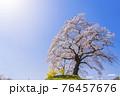 青空と満開の桜 白石川堤一目千本桜 宮城県柴田町 76457676