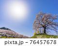 青空と満開の桜 白石川堤一目千本桜 宮城県柴田町 76457678