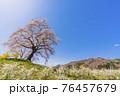 青空と満開の桜 白石川堤一目千本桜 宮城県柴田町 76457679