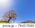 青空と満開の桜 白石川堤一目千本桜 宮城県柴田町 76457680