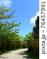 爽やかな青空と白い道 76457991