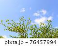 爽やかな青空と新緑 76457994