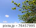 爽やかな青空と新緑 76457995