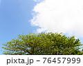 爽やかな青空と新緑 76457999