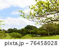爽やかな青空と新緑 76458028
