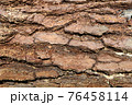 松の木の表面 76458114