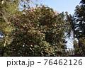 群馬県、吾妻神社の風景 春 76462126