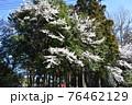 群馬県、吾妻神社の風景 春 76462129
