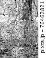 【セピア】鈴鹿の森庭園 梅 76462821