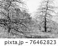 【セピア】鈴鹿の森庭園 梅 76462823
