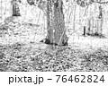 【セピア】鈴鹿の森庭園 梅 76462824