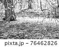 【セピア】鈴鹿の森庭園 梅 76462826