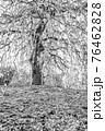 【セピア】鈴鹿の森庭園 梅 76462828
