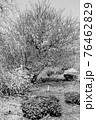 【セピア】鈴鹿の森庭園 梅 76462829