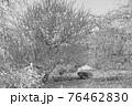 【セピア】鈴鹿の森庭園 梅 76462830