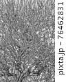 【セピア】鈴鹿の森庭園 梅 76462831