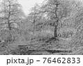 【セピア】鈴鹿の森庭園 梅 76462833