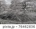 【セピア】鈴鹿の森庭園 梅 76462836