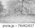 【セピア】鈴鹿の森庭園 梅 76462837