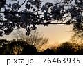 東京都杉並区 堀之内 桜と夕日 76463935