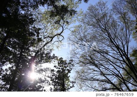 青空に映える森の木々のシルエット 76467659