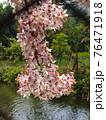 花 フラワー お花 76471918