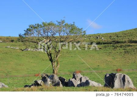 四国カルスト カルスト台地と1本の樹木 76474005