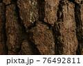 深く彫り込んだような松の樹皮 76492811