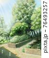 緑の樹木のある爽やかな公園背景素材_木漏れ日の光あり 76493257