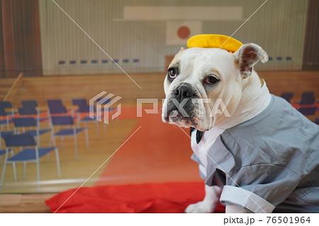 犬 ブルドッグ 入学式 1年生  ランドセル 写真 76501964