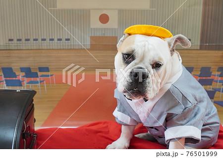 犬 ブルドッグ 入学式 1年生  ランドセル 写真 76501999