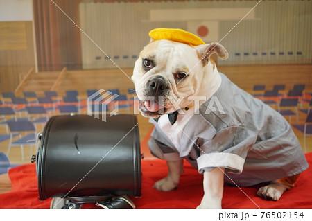 犬 ブルドッグ 入学式 1年生  ランドセル 写真 76502154