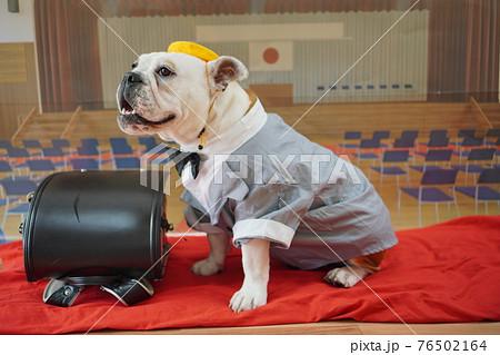 犬 ブルドッグ 入学式 1年生  ランドセル 写真 76502164