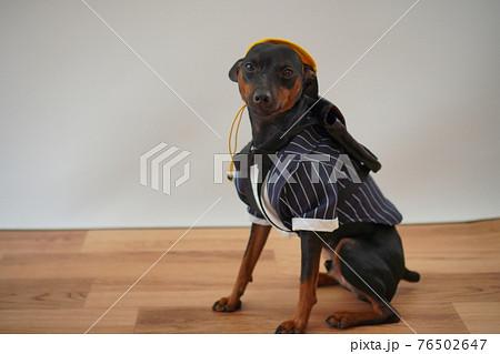 犬 ミニチュアピンシャー 入学式 1年生  ランドセル 写真 76502647