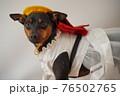 犬 ミニチュアピンシャー 入学式 1年生  ランドセル 写真 76502765