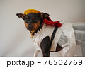 犬 ミニチュアピンシャー 入学式 1年生  ランドセル 写真 76502769
