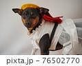 犬 ミニチュアピンシャー 入学式 1年生  ランドセル 写真 76502770