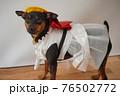 犬 ミニチュアピンシャー 入学式 1年生  ランドセル 写真 76502772