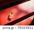 ベンチで寄り添う2枚の紅葉 76503831